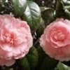 Tout en fleurs ( prises au jardin des plantes)