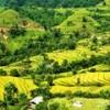 Sightseeing coulant couleurs automnales jaunes sur une saison de maturation du riz pluvial haute