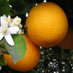 Avatar de jaune oranger