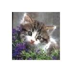 jollycat