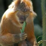 le-singe-orange