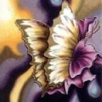 papillon-feerie