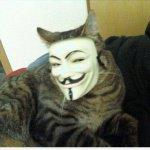 lilik-cat