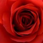 mariam-rosa