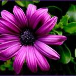 fleur51012