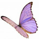 Papillon_1983