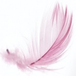 rose plume