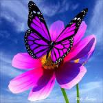 petit-papillon8