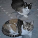 kittypolynette