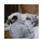 cat93