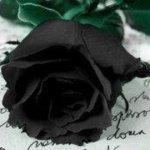 ange-noire3
