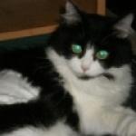 kitty62