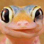 Avatar de gecko54