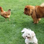 poulette1986