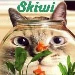 skiwi33