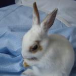 bunny-wabbit