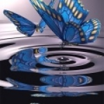 papillon520