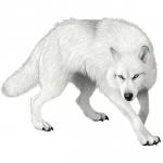 littlewhitewolf