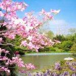 est-le-printemps
