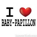 baby-papillon