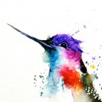 purple_colibri