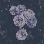 lili_1408
