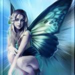 papillon582