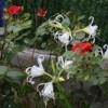 ptipapillondenuit