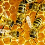 Avatar de trésor miel dunkerque