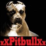 xx-pitbull-xx