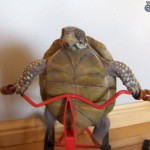 tortue-sexy