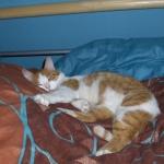 kitty192