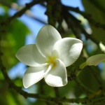 littleflower_b