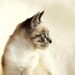 sweet-cat