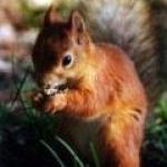 ecureuil13005