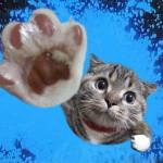 catpower64