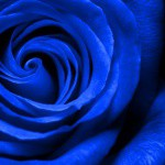 bluefashion0