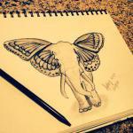 butterfly137