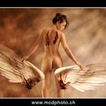 even-angels-fall