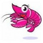 shrimpette70