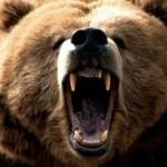 Avatar de orsetta