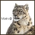 maev2