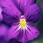 Avatar de violette075