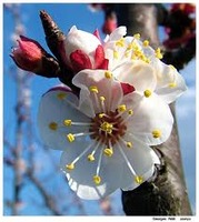 fleurdamande57