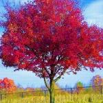 un-arbre