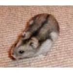 hamster7713