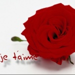 moilili1