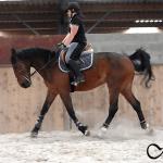 aurhorses