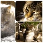 chatcharly