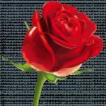 roseduparfum